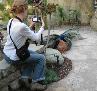 Taking photos during field work